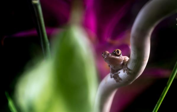 Featured course: Exotic Macro Experience
